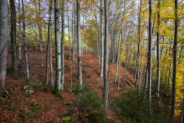 Autumn hiking Autumn Hiking Nature Trees Wood Birch Day Foliage Forest Greenery No People Outdoors Sun With Trees Yellow