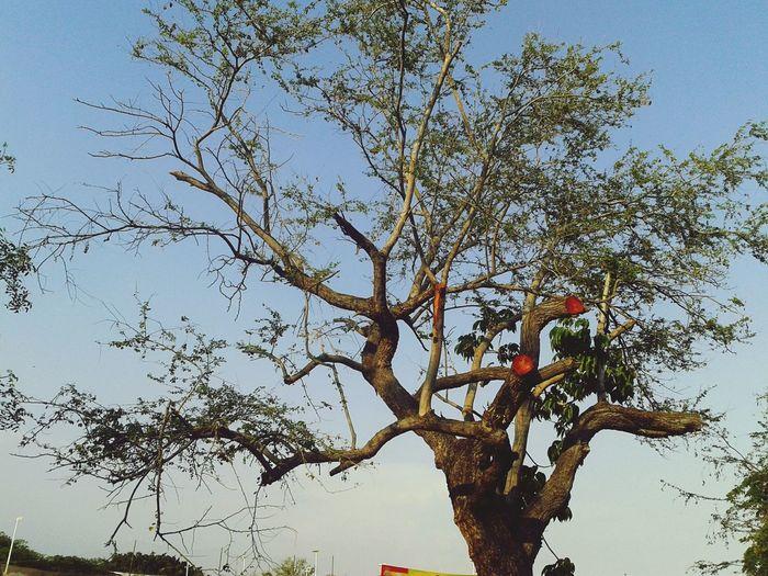Árbol herido Tree Branch Bird Sky Treetop