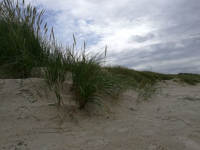 Beach, sand, grass Flower