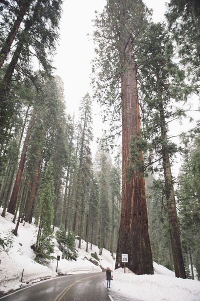 Curly Hair Forest Girl Mountain Nature Road Roadtrip Sequoia Sequoia National Park Snow Snowing Tree Trees