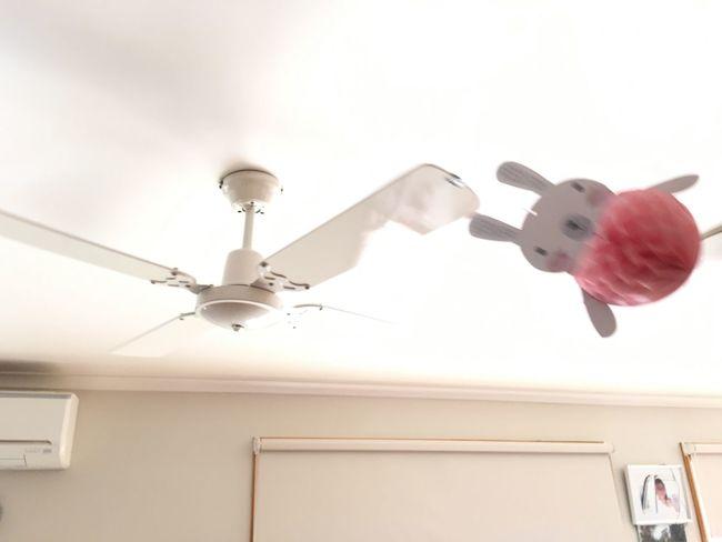 Flying bunny 😄 Easter Bunny