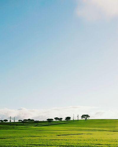 Green Color Blue Sky Travel Naturallight Landscape Portugal Minimalism Minimalistic Nopeople Instagramer Umeugram