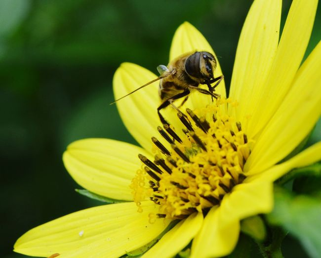 Bee Flowers, Nature And Beauty Flowers,Plants & Garden Beauty In Nature Bee On Flower Bee On The Flower Flower Photography Flowerphotography Nature Photography Flowers Nature Flower Macro Flower Flower Head Petal Animal Themes Plant