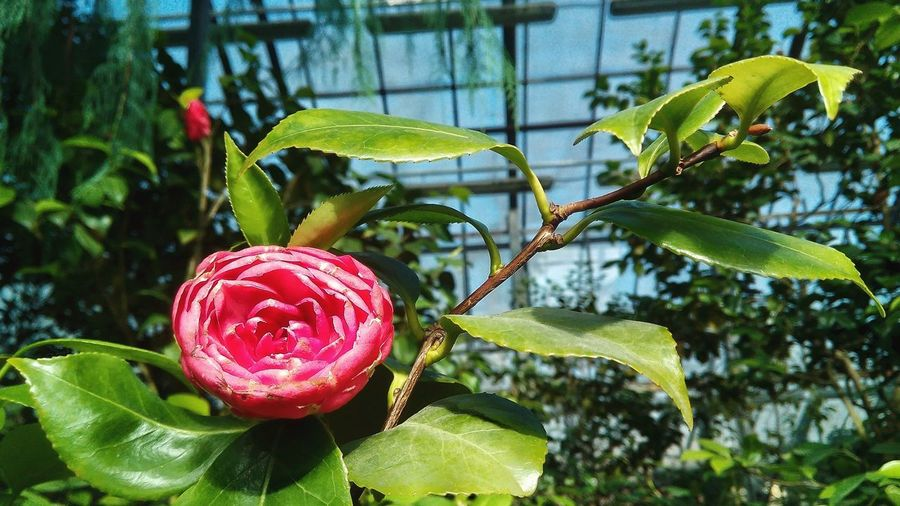 Botanical Garden Botanical Gardens Beauty In Nature Pink Flower Flowerporn Green Garden Pink Bloom Pink Color Tree Leaf Hanging Branch Close-up Plant Green Color In Bloom Botany Plant Life Blossom Blooming Flower Head Cosmos Flower Magnolia Single Rose Single Flower Fragility Apple Blossom Hibiscus
