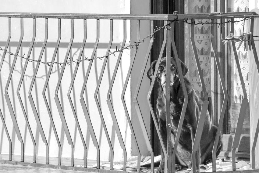 Black Black And White Blackandwhite Close-up Day Dog Drying Grey Hanging No People Octopus Outdoors Pet