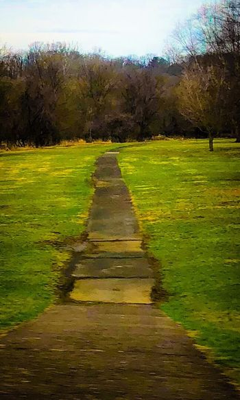 Walking path around the park Grass Tree Tranquil Scene Tranquility Nature Beauty In Nature Green Color Scenics Landscape No People The Way Forward Day Sky Outdoors Growth