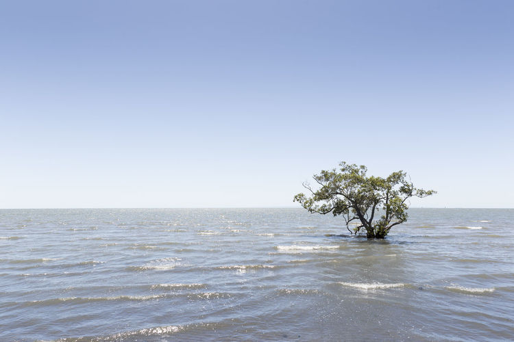Beach Beauty In Nature Clear Sky Day Horizon Over Water Nature No People Outdoors Scenics Sea Sky Tranquil Scene Tranquility Tree Water Waterfront Wave