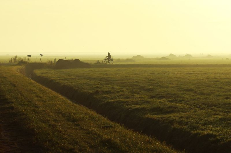 Dutch Light Dutch Landscape Bicycle Countryside Cycling Sunlight Grassland Summer Backlit Backlight Golden Hour Golden Single Person Meadows Paint The Town Yellow