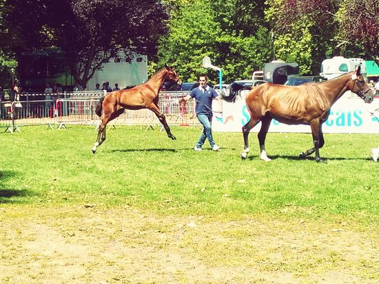 Concours D'elegance Horse Breathing Space