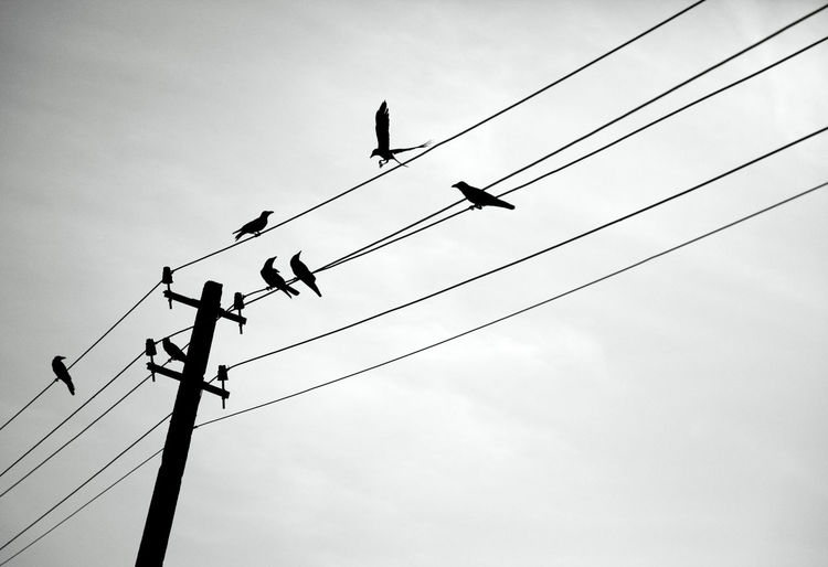 Animal Themes Animals In The Wild Bird Cable Cloud - Sky Connection Day Electricity  Electricity Pylon Low Angle View No People Outdoors Perching Power Line  Power Supply Silhouette Sky Technology Telephone Line