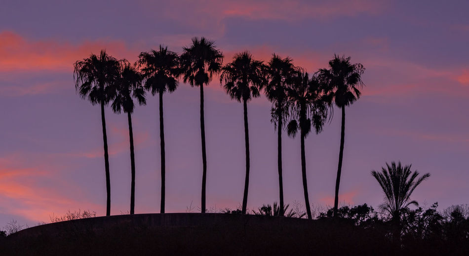 Silhouette palm trees against romantic sky at sunset