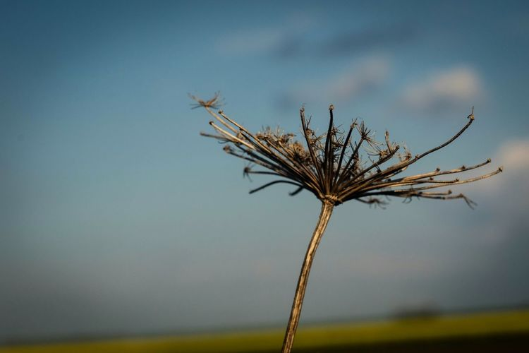 Dry Plant Focus On Foreground Blury Background Close Up Photography Close-up Nature Nature Photography Beauty In Nature