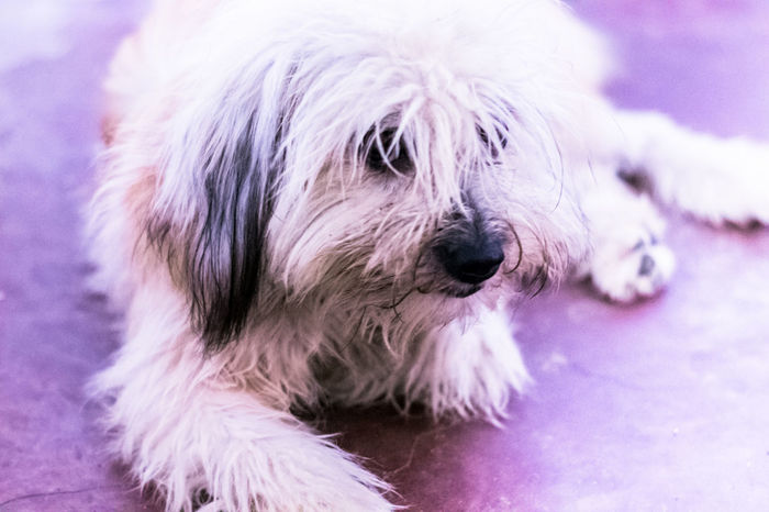 Dog Pets Doggy Love Pet Portraits Animal Themes Doglover Dogslife Dog❤ My Baby