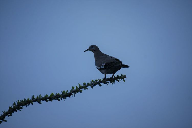 Low angle view of bird perching on branch against sky