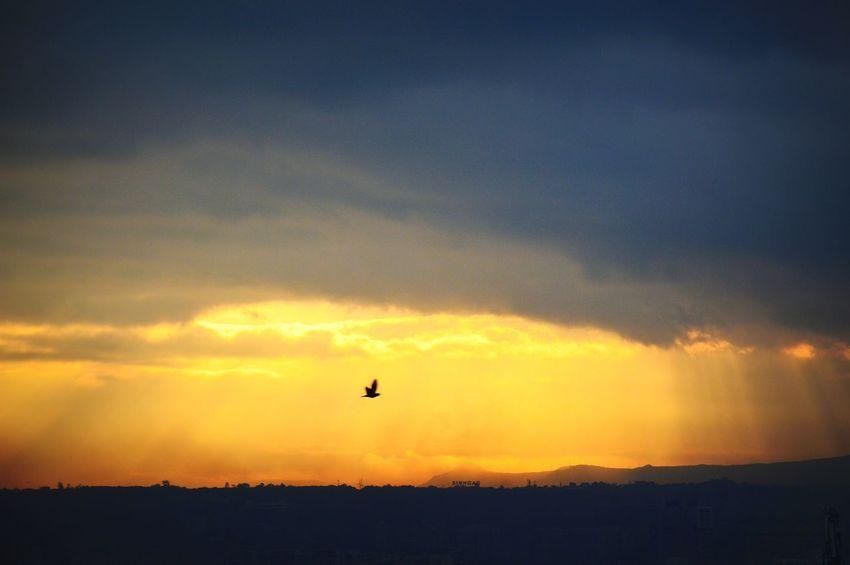 Bird Flying Silhouette Sky No People Beauty In Nature Sunrays Freshness Sunrise Yellowlight Scenics