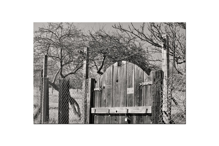 Orchard Gate 2 Garin Regional Park Wooden Gate Orchard Entrance Lock Chainlink Fence Wood Posts Scenic Eastbay Hills Landscape_Collection Trees Painted Tree Trunks Branches Bnw_friday_eyeemchallenge Bnw_gateway Monochrome_Photography Sepia Monochrome Black & White Black & White Photography Black And White Black And White Collection  Nature Beauty In Nature Nature Collection Countryside Grass Close-up Architecture Latch