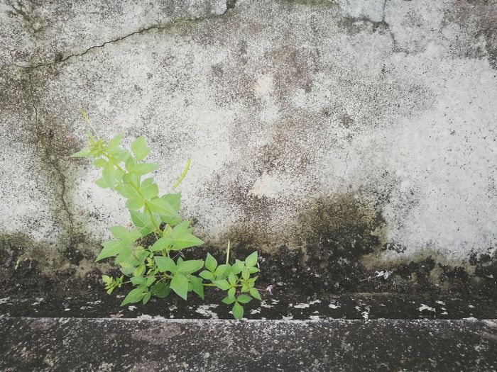 Plants growing by water