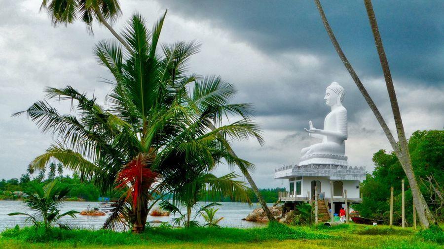 Sri Lanka Sri Lanka Travel Sri Lanka Palm Tree Sky Cloud - Sky Tree Statue Architecture Day