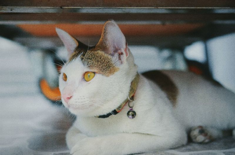 Close-Up Of Cat Looking Away While Resting Below Cart