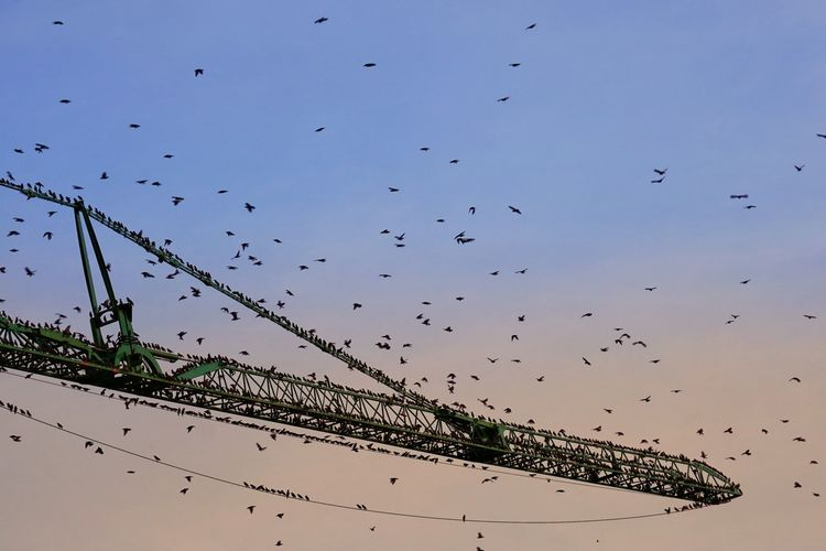 Low angle view of birds flying to crane