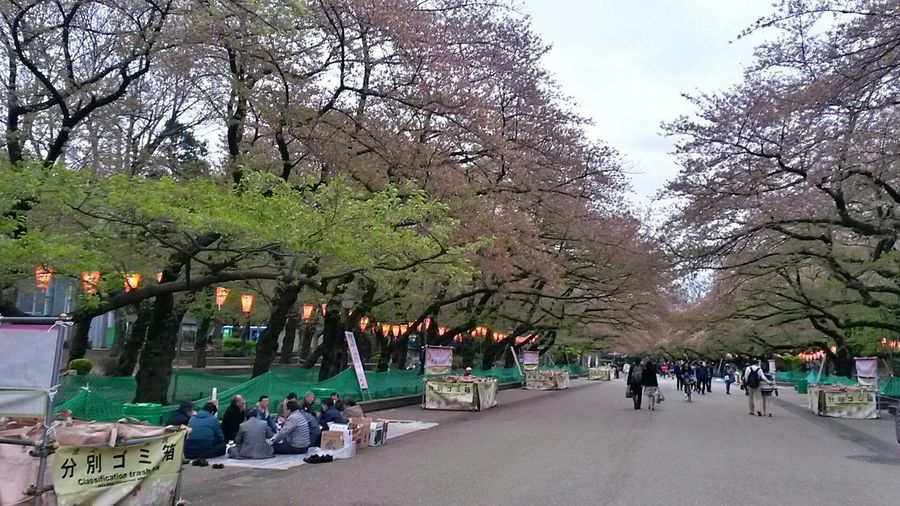 Park Park - Man Made Space Trees Real People City City Park Outdoors Travel Photography Japan Photography Tokyo Photography Tokyo, Japan Spring In Japan Japan Smartphone Photography Smartphonephotography Tokyo Tokyo Park Cold Day In Spring Spring In The City Spring In Tokyo Spring Evening Spring Activities Japanese Culture Cultures