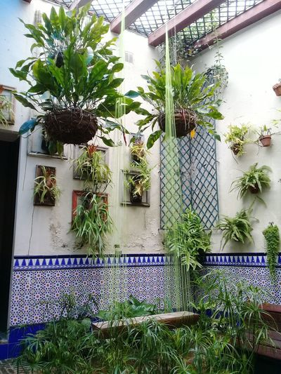 Secret inside Garden Green Patio Inside Photography Travel Photography Travel Freshness Freedom Zona Colonial Tiles Textures Window Architecture An Eye For Travel