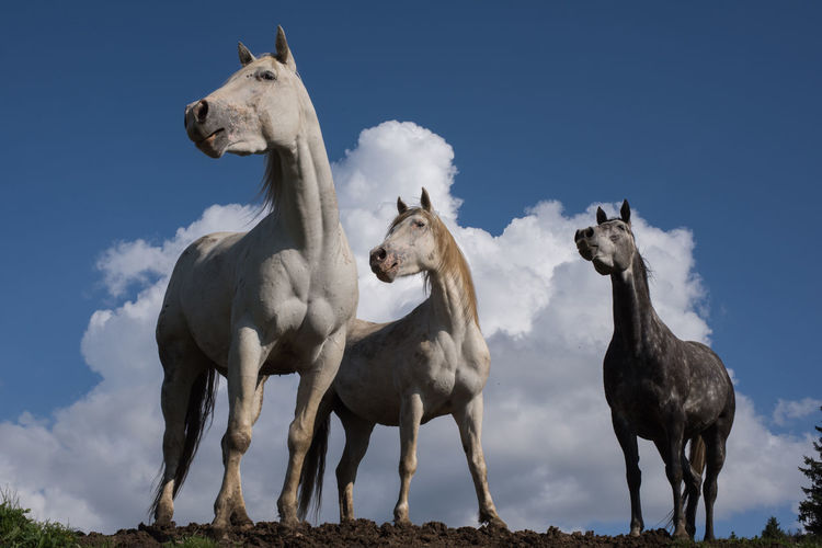 Low angle view of horses