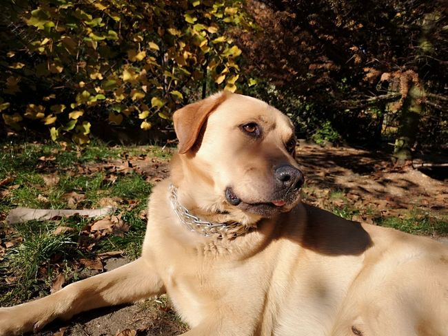 EyeEm Selects Beagle Pets Tree Sitting Dog Sunlight Water Shadow Close-up Pet Leash Canine Purebred Dog Retriever Golden Retriever Black Labrador Labrador Retriever Pet Equipment Pet Collar