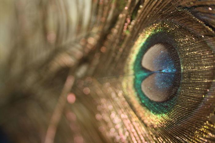 Full Frame Backgrounds Close-up Extreme Close-up Human Eye Detail Selective Focus Macro Eyesight Extreme Close Up Eyeball Eyelash No People Iris - Eye EyeTeam