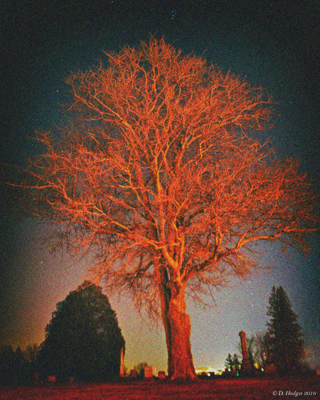 Beauty In Nature Cemetary Cemetery Photography Low Angle View Night Night Photography Nightphotography No People Outdoors Scenics Tree Tree First Eyeem Photo