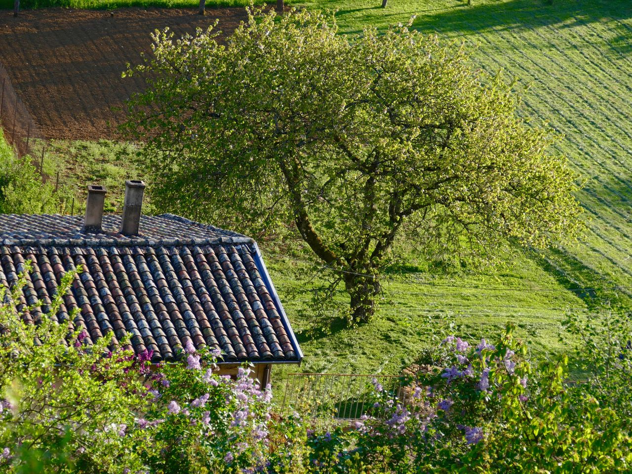 High Angle View Of Tree And House In Grassy Field