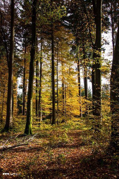 Autumn Autumn Colors Autumn Leaves Colors Of Autumn Herbst Herbstwald Herbstlicht Verstecken Im Herbstwald Liebe Im Herbst Wald