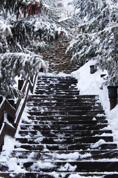 Frozen Ice Winter Architecture Frozen Nature Railing Sky Station Snow Staircase Steps And Staircases Tree White
