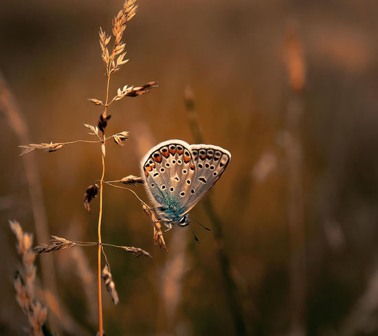 EyeEm Selects Butterfly - Insect Full Length Perching Insect Close-up Plant