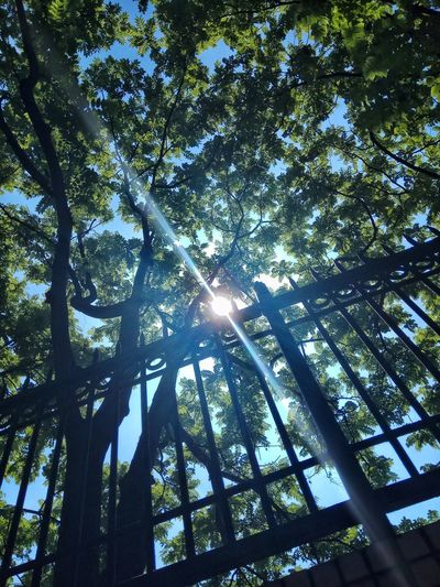 Tree Low Angle View Plant Growth Sunlight No People Nature