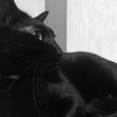 Snapshot Monochrome Cat IPhone 1/2