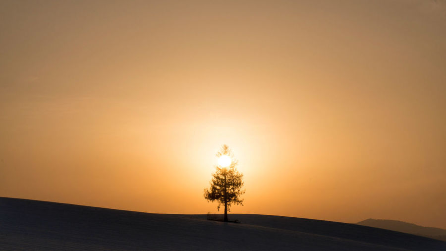 EyeEm Gallery EyeEm Best Shots EyeEmNewHere EyeEm Nature Lover Nature Bare Tree Tree Tree Area Sunset Beauty Rural Scene Silhouette Silence Sun Sunlight Gold Colored Single Tree Treetop Dramatic Sky