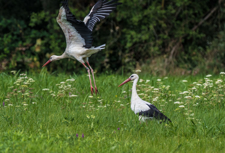 StorKs on a