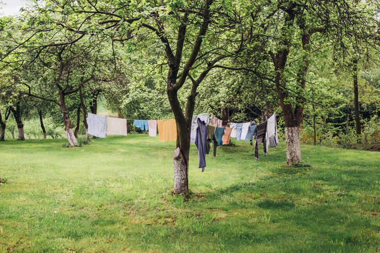 Laundry hanging on a line in between trees drying Laundry Hanging Clothing Drying Grass Nature Field Land Tree Outdoors