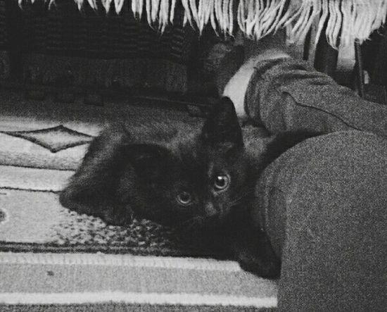 Koichi Cats Cat♡ Amimals Black & White