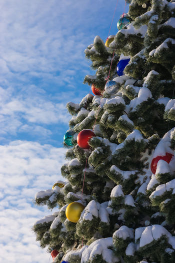 Christmas Christmas Tree Tree Christmas Decoration Branch Celebration Christmas Ornament Hanging Cloud - Sky Day Outdoors Close-up Nature Sky Needle - Plant Part No People Winter Tradition Cold Temperature Blue Vibrant Color Wintertime Illuminated Holiday - Event Christmas Lights