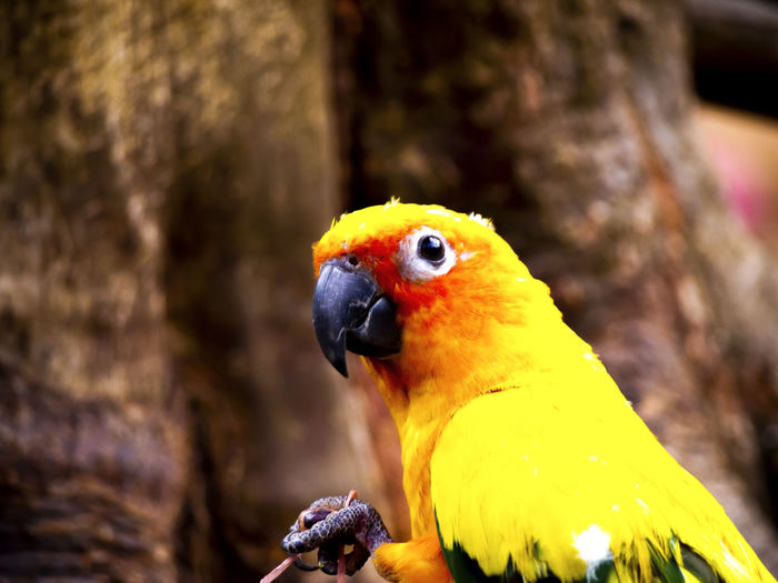 Close-up of parrot perching on branch