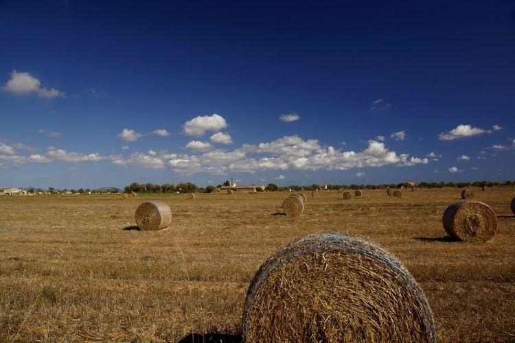 Hay bales on agricultural landscape against sky
