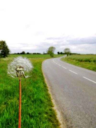 Road amidst flowering plants on field against sky