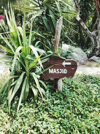 Пакистан Islamabad Pakistan Masjid Природа
