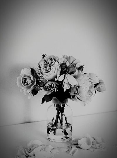 """""""Denn auch der Schatten einer weißen Rose ist schwarz."""" - 🌷"""