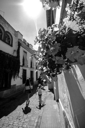 Independent Eye The Street Photographer - 2016 EyeEm Awards SPAIN Blackandwhite People Andalucía Streetphotography Taking Photos Córdoba Beauty Flowers Sunlight Streetphoto_bw Streetphotography_bw