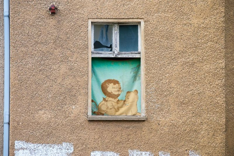 Picture of lion family on curtain at window