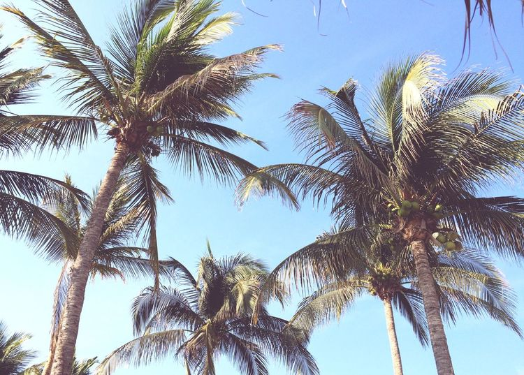 Taking Photos Get Inspired Enjoying Life Relaxing Traveling Weekend Life Is A Beach Nature Palm Trees