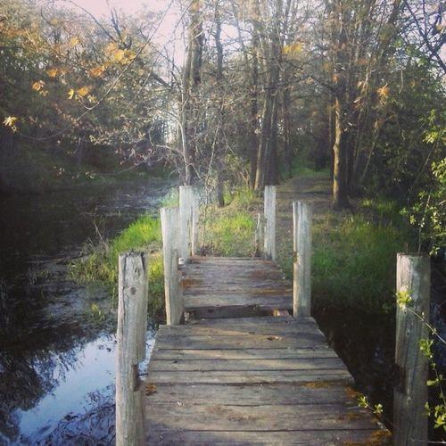 Adventures with Gunner. Sopurty Sketchybridge Myinstagramisturningintonaturededication Idec walks trails river wiscolife